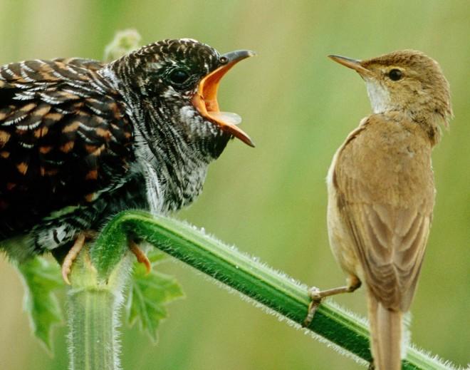 Klimaschutz vs. Biodiversität?